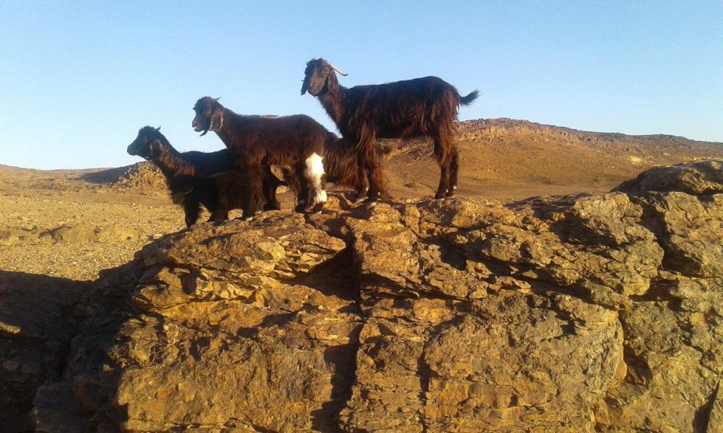 20200206 084356 1024x614 - Med nomadi na jugu Maroka