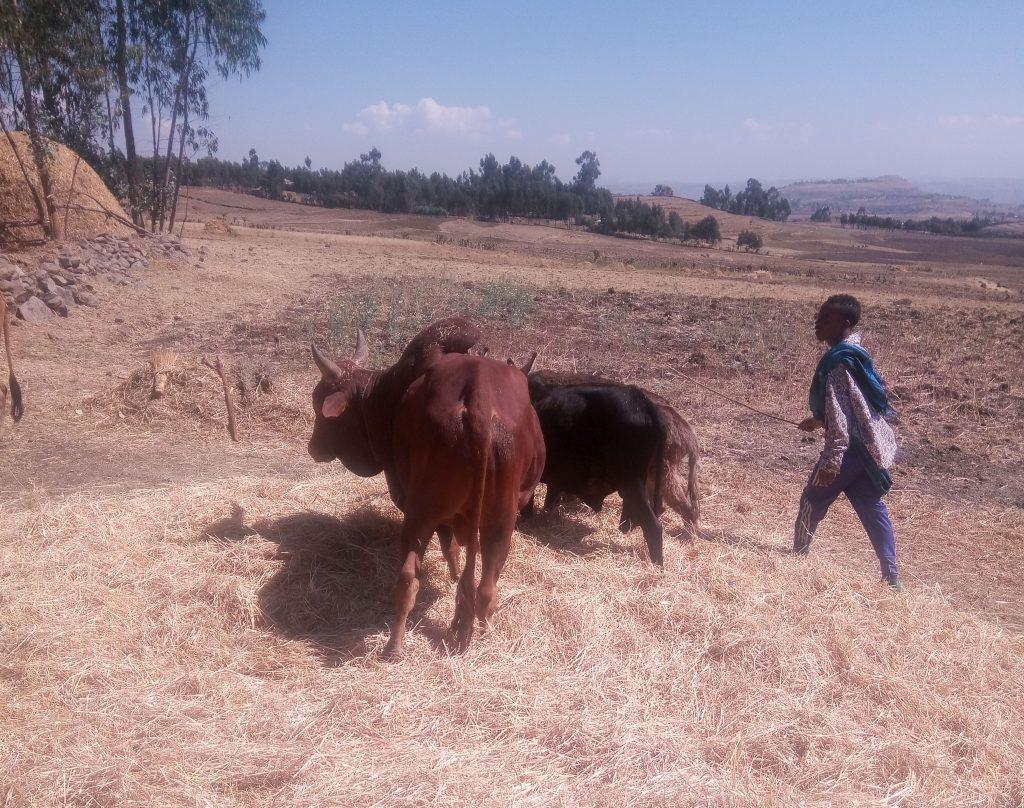 IMG 20200203 105646 m 1024x808 - Zgodbe iz Etiopije