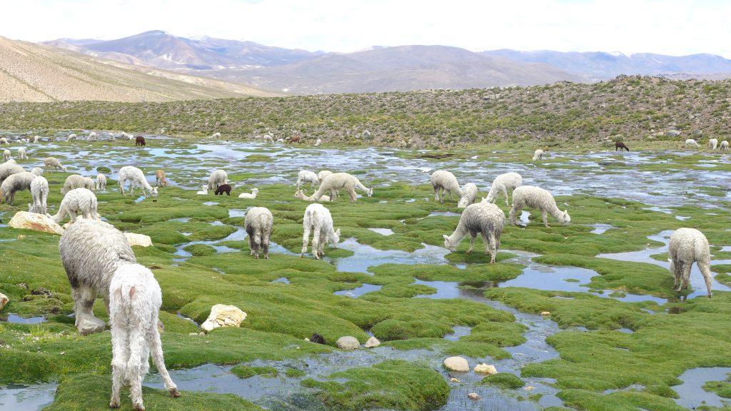 P1050153 1024x576 - Magični Peru