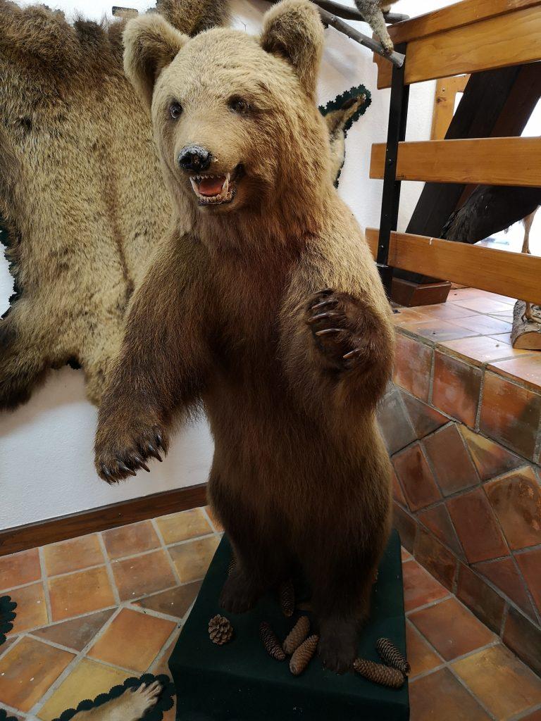 """V deželi medveda junij 2020 36 768x1024 - Zakaj v """"deželo medveda"""" z Oskarjem?"""
