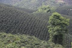 11.-Kolumbija-dezela-kave.