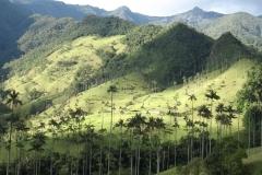12.-NP-Los-Nevados-kjer-rastejo-najvisje-palme-na-svetu.