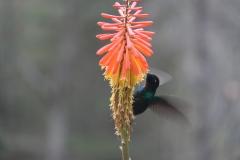 05.-Na-nasi-poti-po-Kolumbiji-se-Kolibriji-radi-nastavijo-fotografu.