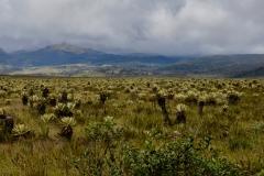 06.-Paramo-poseben-ekosistem-flore-in-favne-kateri-se-lahko-cudis-v-nekaterih-drzavah-latinske-Amerike...tudi-v-Kolumbiji.