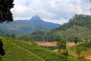 Šrilanka- Adamov vrh