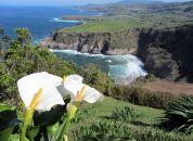 Azores-Sao Miguel-Miradouro St. Iria,
