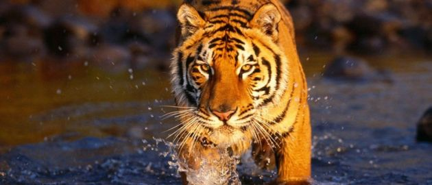 Bangladeš-NP Sundarbans