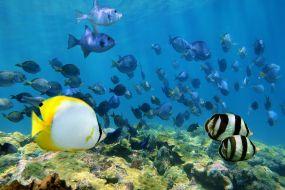 Belize, pod morjem