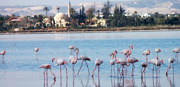 Ciper- Flamingi na jezeru