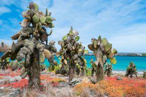Galapagos-pokrajina