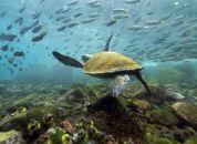 Galapagos-želve