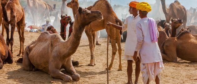 Indija-Pushkar-kamelji-sejem