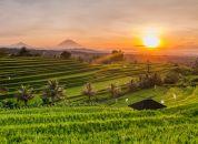 Indonezija-Bali-riževe-terase