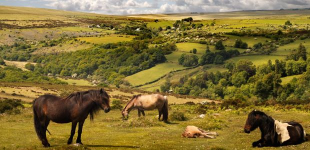 Jugozahodna Anglija-Somerset-Exmoor