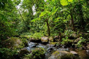 Kostarika-džungla