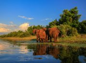 JAR - nacionalni park Kruger-sloni