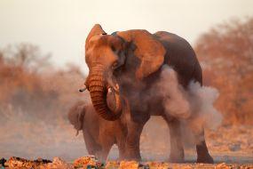 Namibija – nacionalni park Etosha