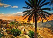 Oman-palma