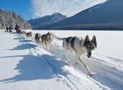 Kanada-Yukon-vlečni psi