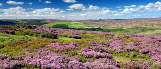 S Anglija-Yorkshire Moors