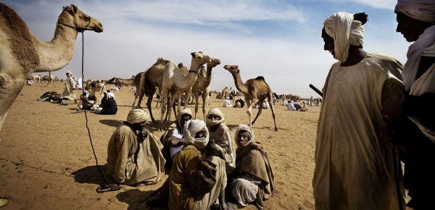 Sudan - kamele