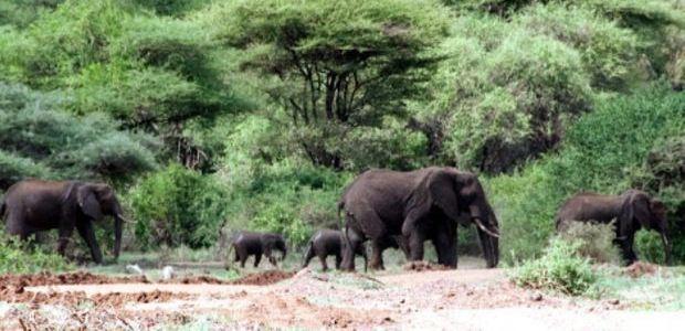 Kenija-divjina