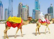 Dubaj-Kamele