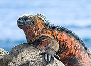 Ekvador, Galapagos-Kuščar