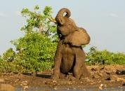 Gana-Slon