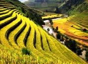 Vietnam-Riževe terase-vnlk