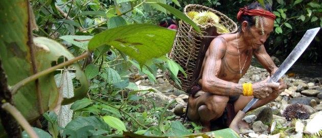 Indonezija-Nabiranje duriana v džungli