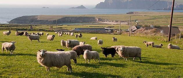 Irska-Zelena dežela
