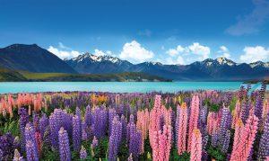 Nova Zelandija - jezero Tekapo