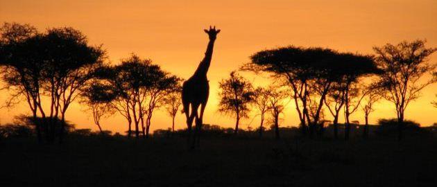 Tanzanija in Kenija