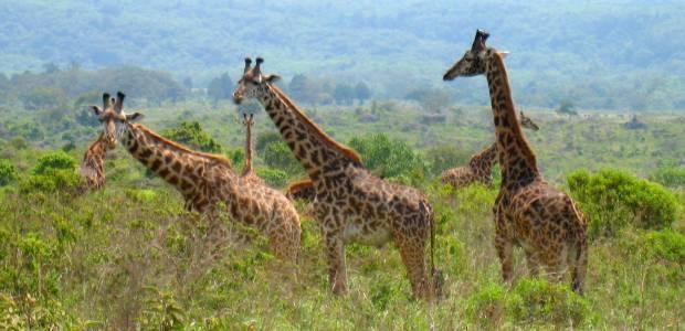 Kenija, Tanzanija-Živalski svet