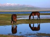 Kirgizija-Konji