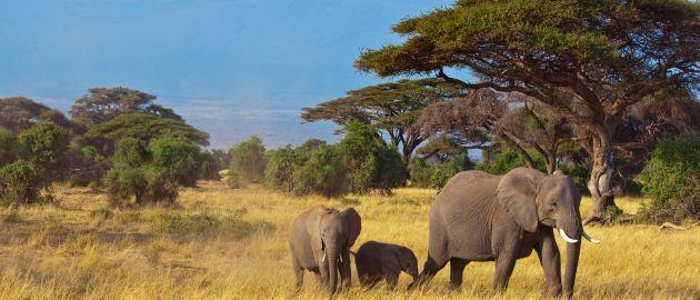Mogočni Kilimandžaro-Safari in Zanzibar-Sloni