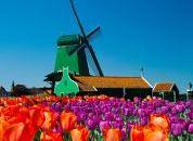 Nizozemska-mlini na veter in tulipani