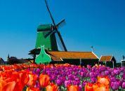 Nizozemska - Mlin na veter, tulipani