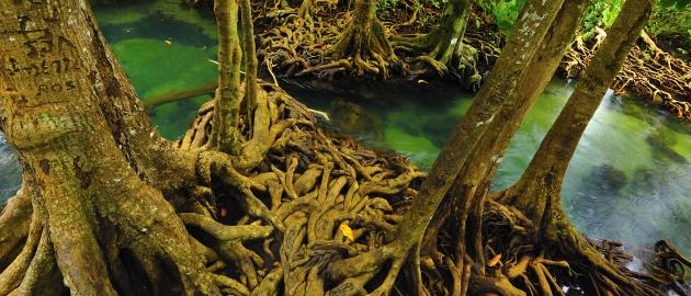 Amazonija-Deževni gozd
