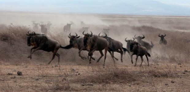 Podsaharska Afrika potovanje