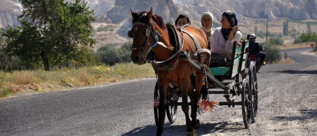 Zahodna Turčija-Konjska vprega