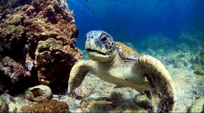 Ekvador-Galapagos-želva