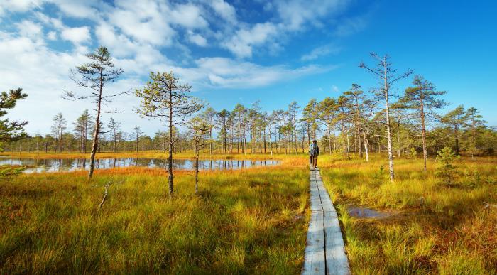 Estonija-NP Lahemaa-pot cez mocvirje-i