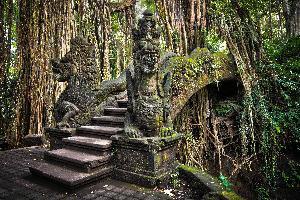 Indonezija-Bali-Monkey-forest