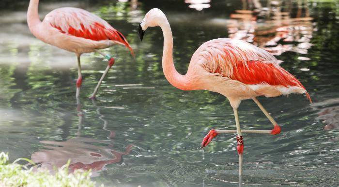 italija_verona_zoo