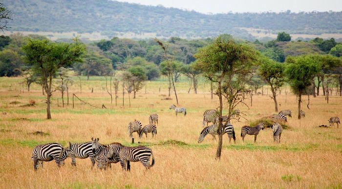 JAR-Juzna-afrika-zebre