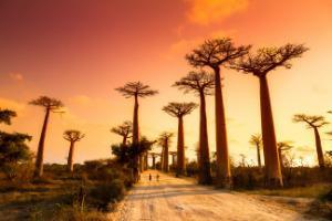 Madagaskar-Avenija baobabov