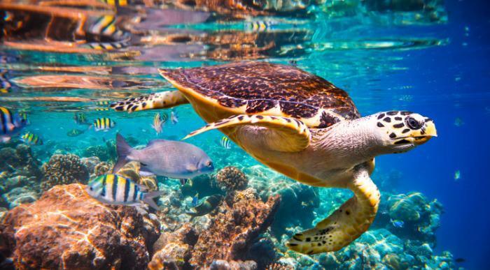 Maldivi-morski svet