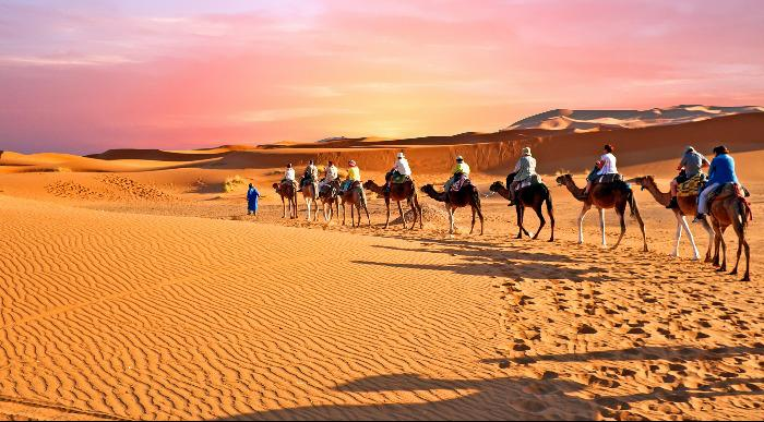 Maroko-kamele v puščavi